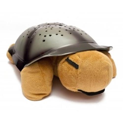 Noční želvička - Hnědá