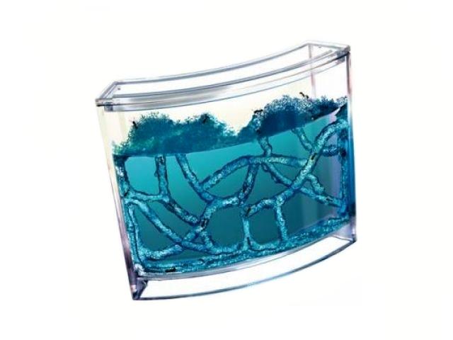 Mravenčí akvárium - Antquarium, Modré