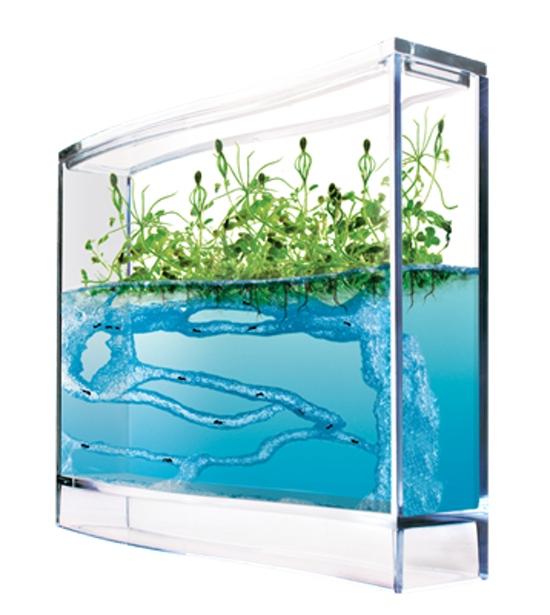 Forest Ant Ecoterrarium, Mravenčí akvárium